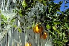 klímaváltozás, közlekedés, mezőgazdaság, tél