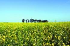 mezőgazdaság, támogatás