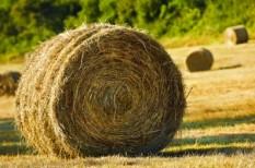 biomassza, bíróság, energiafogyasztás, építőipar