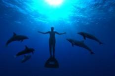 állat, film, óceán, törvény