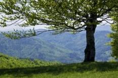emissziókereskedelem, fa, környezetvédelem