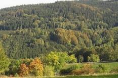 e-számla, erdő, fenntarthatóság, papír