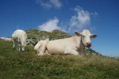 alternatív, biogáz, energia, mezőgazdaság, üvegházhatás