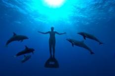 állat, óceán, törvény