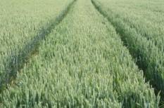 élelmiszer, klímaváltozás, mezőgazdaság, termőföld