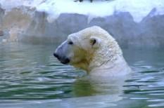 Északi-sark, jégtakaró, klímaváltozás, óceán, tudomány