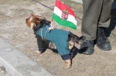 alkotmány, jog, környezetvédelem, magyarország