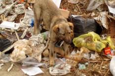 fogyasztó, hulladék, környezetvédelem, szemét