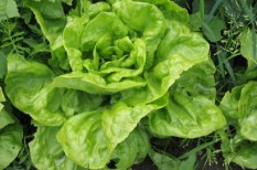 agrár, magyarország, mezőgazdaság, zöldség