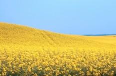 agrár, biogazdálkodás, élelmiszer, mezőgazdaság, vidékfejlesztés