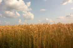 agrár, bírság, gmo, jogsértés, mezőgazdaság