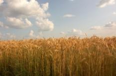 agrár, gmo, mezőgazdaság, tilalom