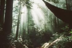 biomassza, fa, tudomány