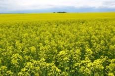 agrártámogatás, bioetanol, etanol, eu, támogatás, törvény