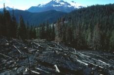 ensz, erdő, környezetvédelem, ökológia