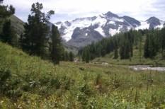 biodiverzitás, ökológia, statisztika, számító, termőföld