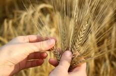 agrár, gmo, mezőgazdaság, per
