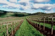 agrár, agrár széchenyi kártya, családi gazdaság, földtörvény, mezőgazdaság