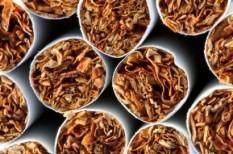 dohánytermelés, madosz, munkahelyteremtés, szabályozás, who