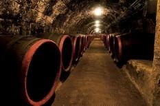 bor, borászat, mezőgazdaság