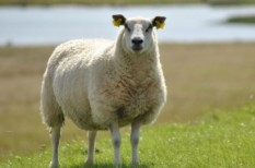 agrár, agrárfinanszírozás, agrártámogatás, állatenyésztés, állattartás, kkv pályázat, kkv támogatás, mezőgazdaság, uniós források, uniós pénz