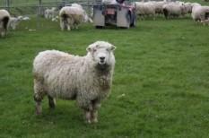 állatenyésztés, kkv finanszírozás, kkv hitel