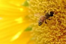 élelmiszeripar, méhészet, méztermelés