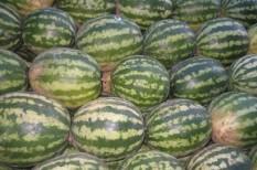 adóhatóság, dinnye, élelmiszer-értékesítés