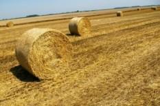 beszállító, biomassza, biomassza erőmű, co2-semleges, felvásárlás, fenntartható település