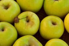 gyümölcstermesztés, marketingkampány, mezőgazdaság