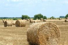 állatenyésztés, aszály, gabonatermesztés, mezőgazdaság, mezőgazdasági árak, takarmány