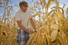 aszály, mezőgazdaság, takarmány