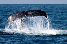 állatvédelem, bioszféra, élővilág, környezetvédelem, óceán, szállítmányozás, zajártalom