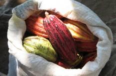 élelmiszer-kereskedelem, fenntartható termelés, fenntarthatóság, környezetvédelem