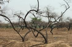 áradás, halálozás, hőguta, klímaváltozás, következmények, szárazság, vírus