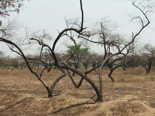 Katasztrofális hatásokkal jár a klímaváltozás - Kép: SXC