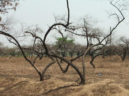 Szörnyű károkat okozott a szárazság - Kép: SXC