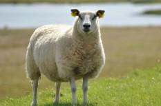 agrárfinanszírozás, állattenyésztés, uniós pénzek