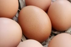 áruházlánc, tojás, tojásszövetség