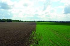 mezőgazdaság, szója