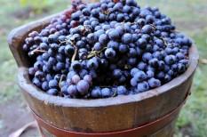 borászat, bortermelés, földművelésügyi minisztérium, hegyközösségek, szőlőtermesztés, szőlővásárlás