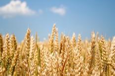 élelmiszerbiztonság, élelmiszeripar, mezőgazdaság