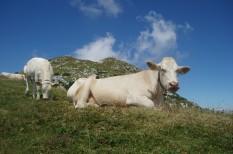 élelmiszer, emisszió, mezőgazdaság
