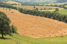 mezőgazdaság, őstermelő, termőföld