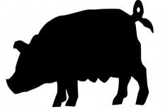 állatenyésztés, állattenyésztés, sertéstenyésztés