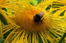 agrár, eu, kemikália, méhészet, usa, vegyipar