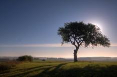 erdőgazdálkodás, fenntartható gazdaság, milliárdos