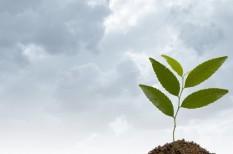agrárbiztosítás, fagykár, hazai termés, jégkár, mezőgazdaság, nak, növénybiztosítás