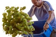 agrártámogatás, határidő, támogatás