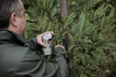 gyümölcstermesztés, mezőgazdaság, növényvédő szerek